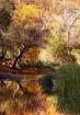 Az Fall