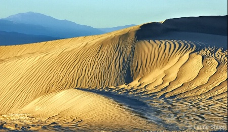Anatomy of a Sand Dune
