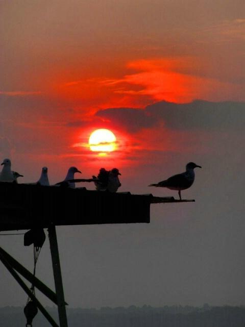 Sunrise on Cayuga Lake