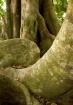 Rain Forest Beaut...
