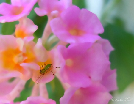 The Underflower Bug
