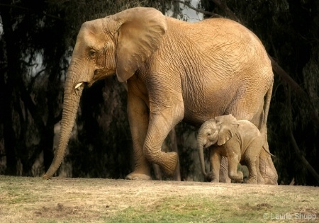 In Step with Mom