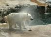 Polar Shake