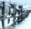 Promontory Fence