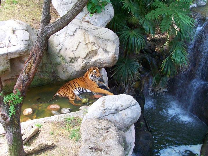 Jungle paradise....