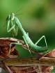 Photo Bug ..Glamo...