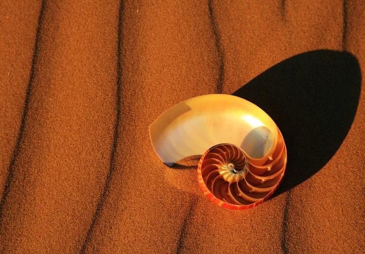The Shell                                     - ID: 5296356 © Leslie McLain