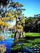 Caddo Lake In Oct...