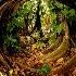 © Anna Laska PhotoID # 5327531: The Banyan Paradise