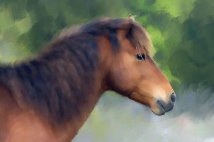 My Brown Pony
