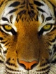 Endangered I