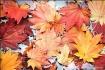 Fall's Facade