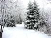 Winter on Crocus ...