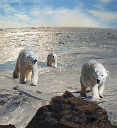 Polar Bear Dreams