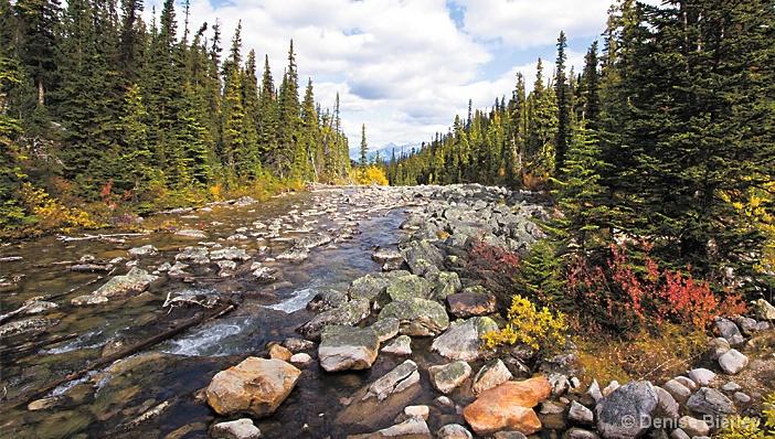 Autumn Stream, Jasper - ID: 5424222 © Denise Bierley