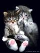 Precious Cute and...