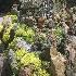 © Patricia A. Casey PhotoID # 5506470: Peterson's Rock Farm - Redmond, OR