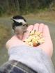 Bird Feeding Fun
