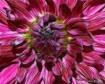 Fleur 2(2nd Place...