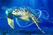 Magic Sea Turtle