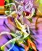 Ant in Ballet Sho...