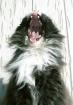 the cat that roar...