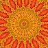 2Poppy in Orange - ID: 5610602 © Debbie Hartley