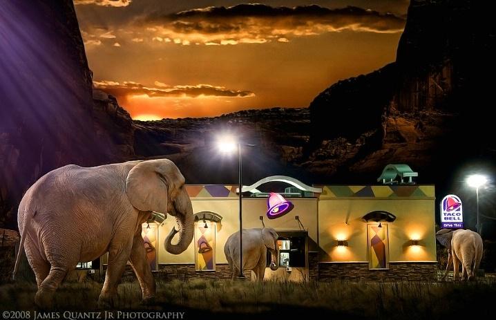 Vanishing Habitat: Elephants at the Border