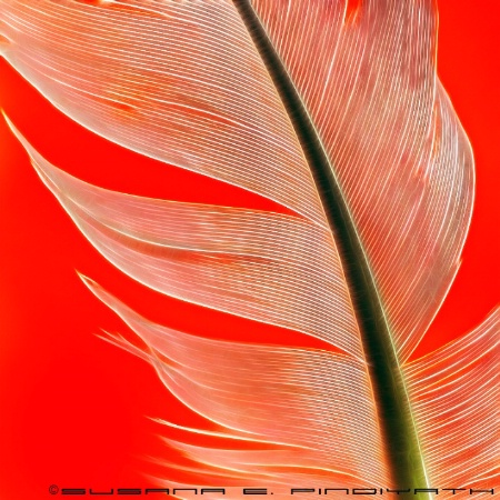 Feather Fractals