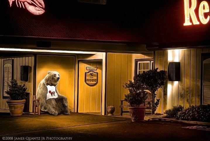 Vanishing Habitat: Bear After Dark