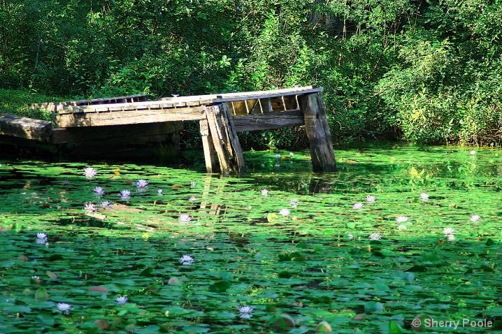 The Secret Fishing Spot