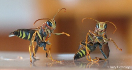 Fun with Wasps