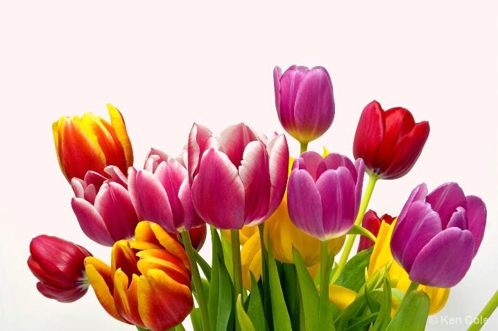 Spring Tulips - ID: 5661680 © Ken Cole