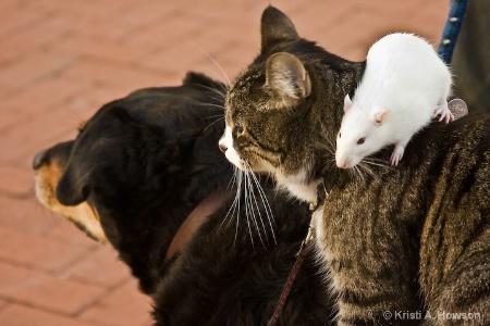 Cat, Rat & Dog