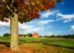 Red Barn in Autum...