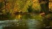 Thornapple River_...