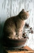 potted cat {growi...