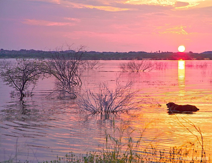 The sun always sets on Brandy - ID: 5698399 © Emile Abbott