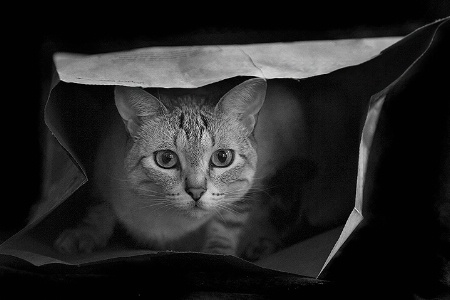 Hush......Don't let the cat out of the bag!!!