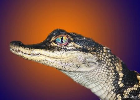 Gator Fever