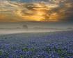 Misty Morning Sun...