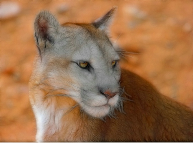 Altered Cougar - ID: 5776757 © Richard L. Smith