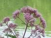 Flowers - Purple