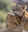 Mom's Love
