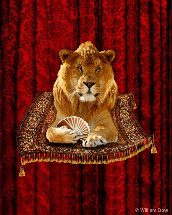 Liger Patrick on a Magic Carpet. - ID: 5793248 © William Dow