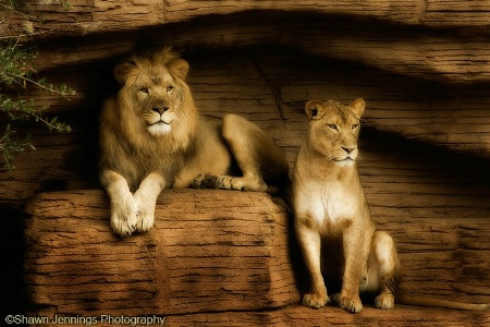 - The King & His Queen -