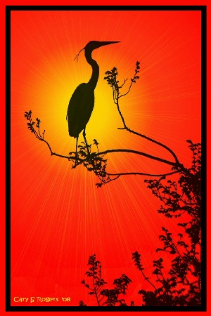 Day of the Great Blue Heron