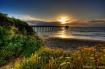 Pelican Pier Suns...