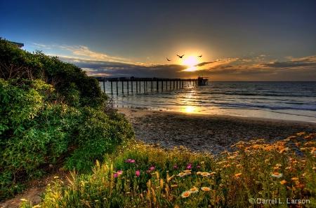Pelican Pier Sunset