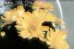 soft glow flowers